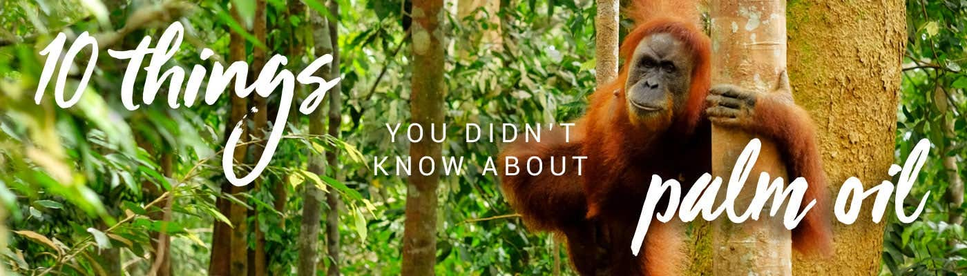 10 things you didn't know about palm oil
