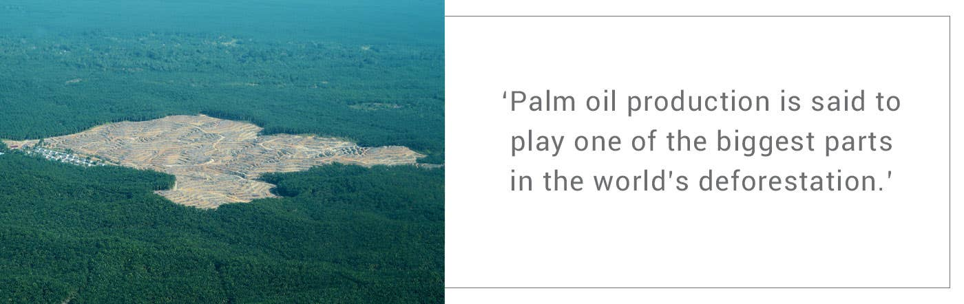 Quote about palm oil creating deforestation