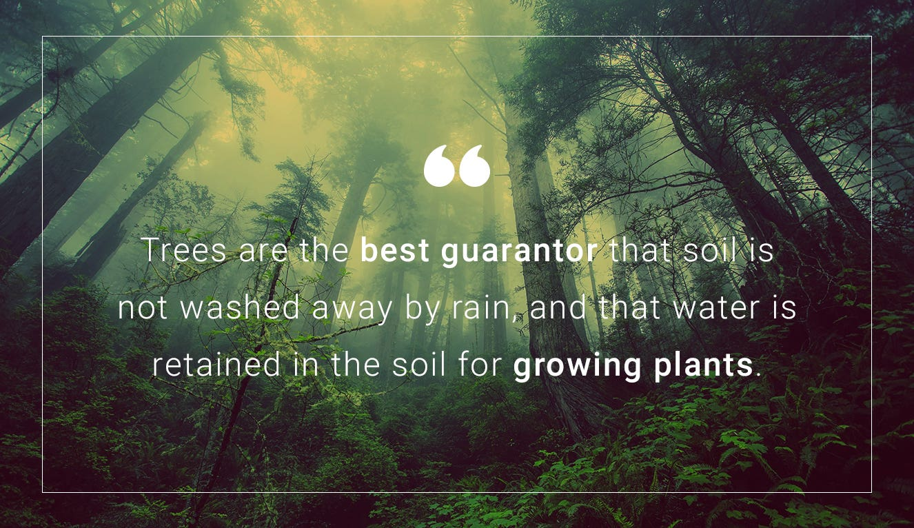 A quote about trees and one of the reasons they're so good for soil